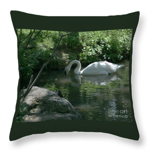 Trumpeter Swan Throw Pillow featuring the photograph Trumpeter Swan by Dawn Downour