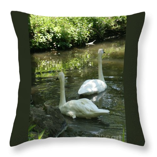 Water Throw Pillow featuring the photograph Trumpeter Swans by Dawn Downour