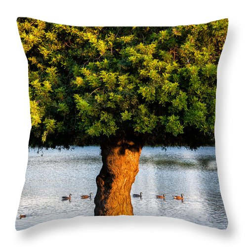 California Throw Pillow featuring the photograph Trying To Get My Ducks In A Row. by Wasim Muklashy