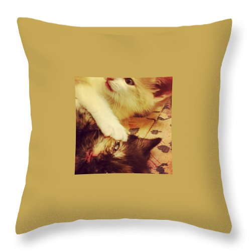 Kittens Throw Pillow featuring the photograph Was Asleep by Charley Upton