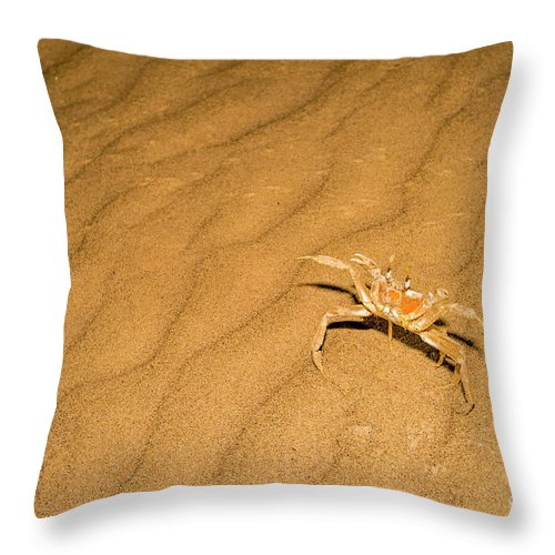 Tufted Ghost Crab Throw Pillow featuring the photograph tufted ghost crab Ocypode cursor on sand by Alon Meir