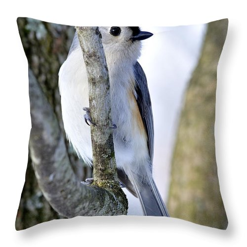 Tufted Titmouse Throw Pillow featuring the photograph Tufted Titmouse On Dogwood by Thomas R Fletcher
