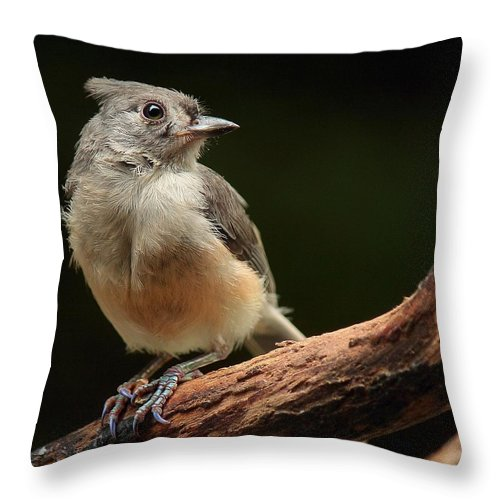 Tufted Throw Pillow featuring the photograph Tufted Titmouse by Paul Mays