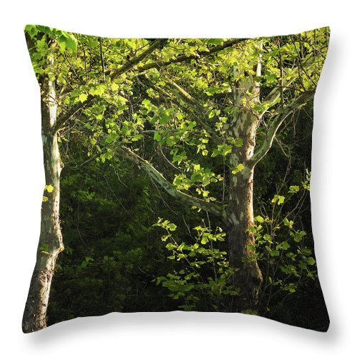 Maple Throw Pillow featuring the photograph Branches Of Lovely Light by Laura Ragland