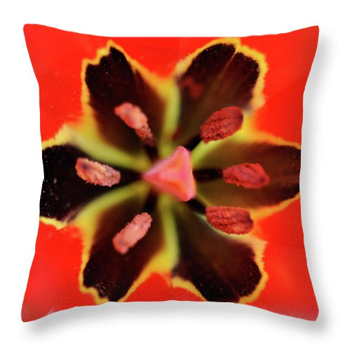 Tulip Throw Pillow featuring the photograph Tulip At Amatzia Forest - 4 by Dubi Roman