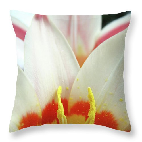 �tulips Artwork� Throw Pillow featuring the photograph Tulip Flowers Art Prints 4 Spring White Tulip Flower Macro Floral Art Nature by Baslee Troutman