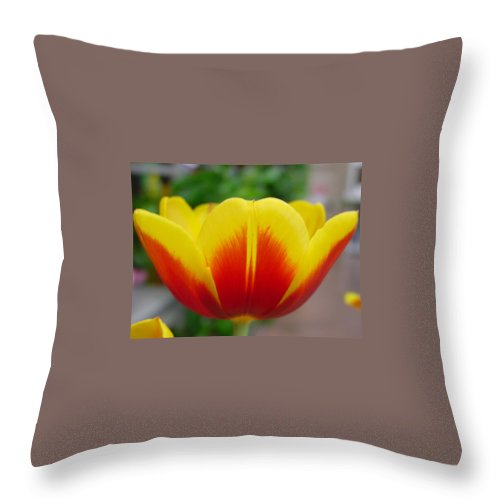Tulip. Flower Throw Pillow featuring the photograph Tulip by Kathy Bucari