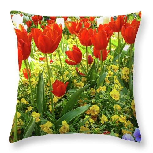 Gerlya Sunshine Throw Pillow featuring the photograph Tulip Lawn On The Flower Island Mainau. Germany. by Gerlya Sunshine