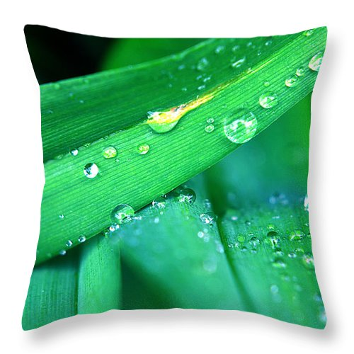 Tulip Throw Pillow featuring the photograph Tulip Leaf Droplets-2 by Steve Somerville