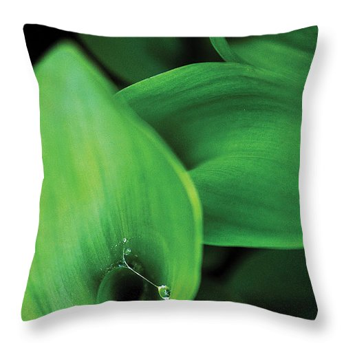 Nature Throw Pillow featuring the photograph Tulip Leaves-1 by Steve Somerville