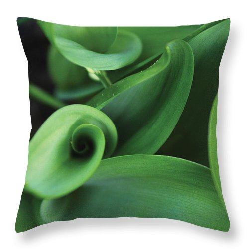 Plant Throw Pillow featuring the photograph Tulip Leaves by Steve Somerville