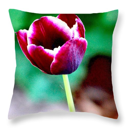 Digital Photo Throw Pillow featuring the photograph Tulip Me by David Lane