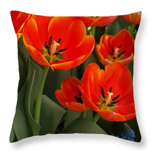 Ann Keisling Throw Pillow featuring the photograph Tulip Power by Ann Keisling
