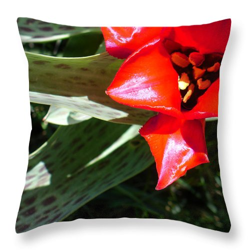 Tulip Throw Pillow featuring the photograph Tulip by Steve Karol