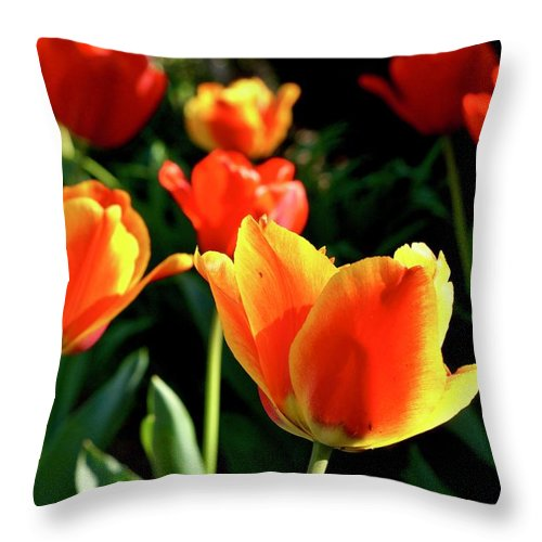 Summer Throw Pillow featuring the photograph Tulip Time by Beth Deitrick