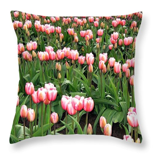 Agriculture Throw Pillow featuring the photograph Tulip Town 8 by Will Borden