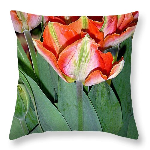 Nature Throw Pillow featuring the photograph Tulips - A Bunch Of Beauties by Lucyna A M Green