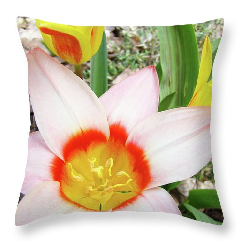 �tulips Artwork� Throw Pillow featuring the photograph Tulips Artwork 9 Spring Floral Pink Tulip Flowers Art Prints by Baslee Troutman