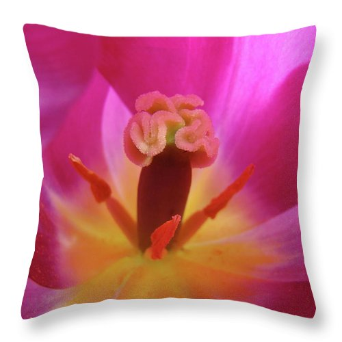 �tulips Artwork� Throw Pillow featuring the photograph Tulips Artwork Pink Purple Tuli Flower Art Prints Spring Garden Nature by Baslee Troutman