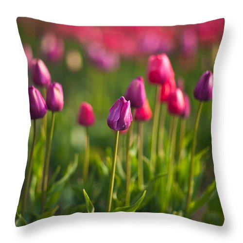 Tulip Throw Pillow featuring the photograph Tulips Dream by Mike Reid