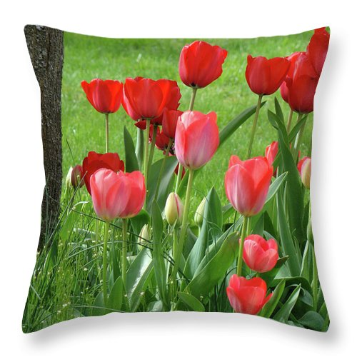 �tulips Artwork� Throw Pillow featuring the photograph Tulips Flowers Art Prints Spring Tulip Flower Artwork Nature Art by Baslee Troutman