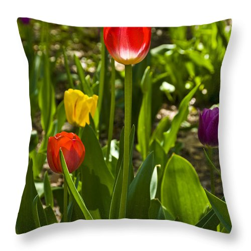 Spring Throw Pillow featuring the photograph Tulips In The Garden by Anthony Sacco