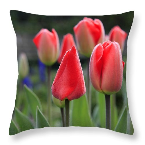 Tulips Throw Pillow featuring the photograph Tulips by Phil Crean