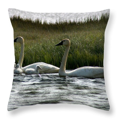 Swans Throw Pillow featuring the photograph Tundra Swans And Cygents by Anthony Jones