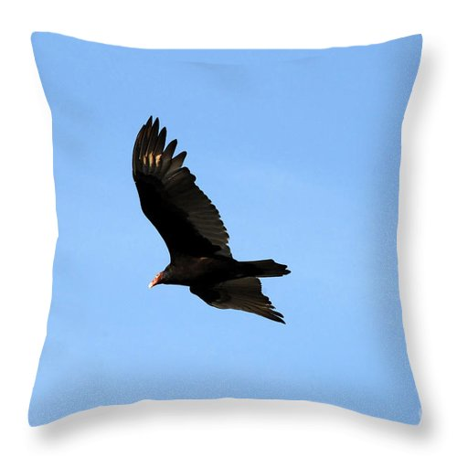 Turkey Vulture Throw Pillow featuring the photograph Turkey Vulture by David Lee Thompson