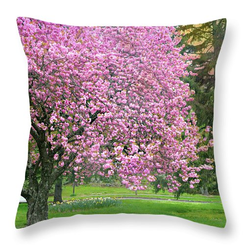 Cherry Blossom Tree Throw Pillow featuring the photograph Turn The Car Around by Diana Angstadt