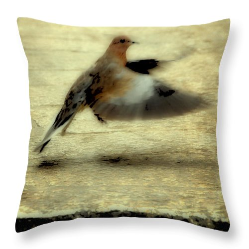 Jewish Throw Pillow featuring the photograph Turtle Dove by Deb Cohen