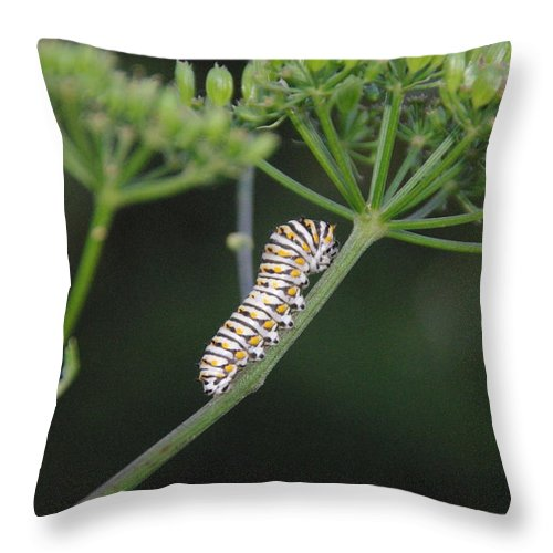 Caterpillar Throw Pillow featuring the photograph Twilight Caterpillar by Robyn Stacey