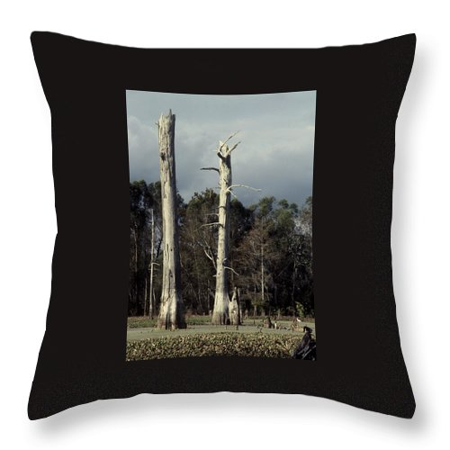 Dead Trees Throw Pillow featuring the photograph Twin Cypress by Herman Robert