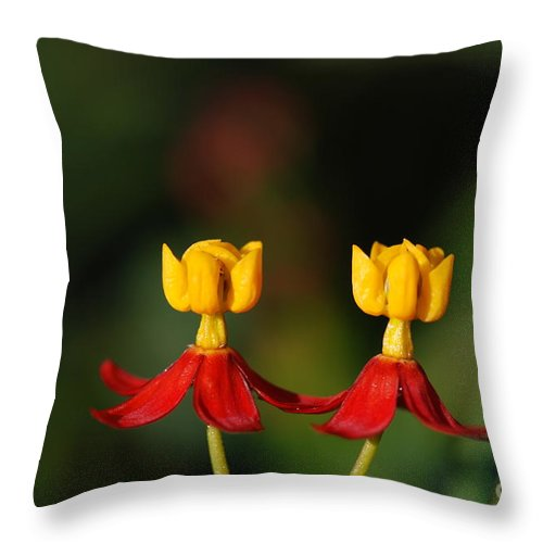 Macro Throw Pillow featuring the photograph Twin Dancer by Catherine Lau