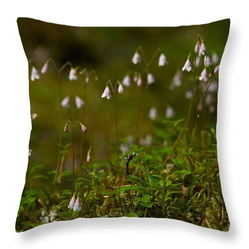 Helvetinjarvi National Park Throw Pillow featuring the photograph Twinflower by Jouko Lehto