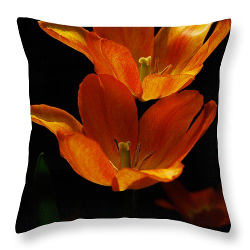 Lois Bryan Throw Pillow featuring the photograph Twins by Lois Bryan