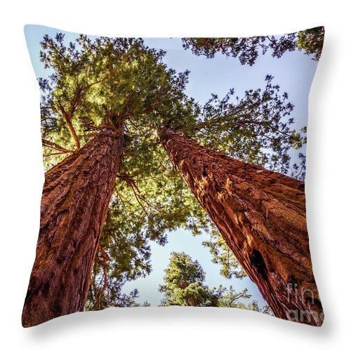 Nature Throw Pillow featuring the photograph Twins by Mirko Chianucci