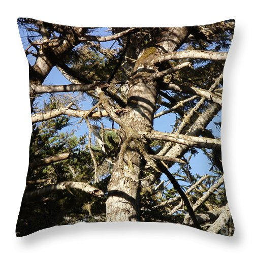 Tree Throw Pillow featuring the photograph Twisted Branches by Cassandra Geernaert