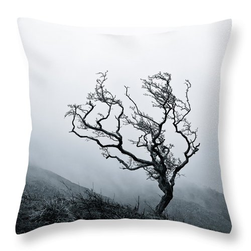 Tree Throw Pillow featuring the photograph Twisted by Dave Bowman