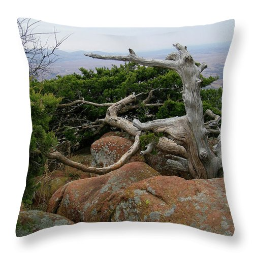 Wichita Mountains Throw Pillow featuring the photograph Twisted View by Gale Cochran-Smith
