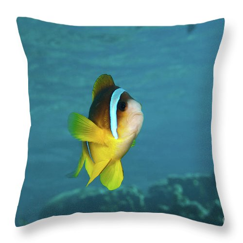 Coral Throw Pillow featuring the photograph Two-banded Clownfish by Hagai Nativ