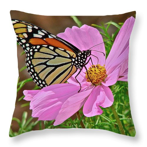 Butterfly Throw Pillow featuring the photograph Two Beauties by Diana Hatcher