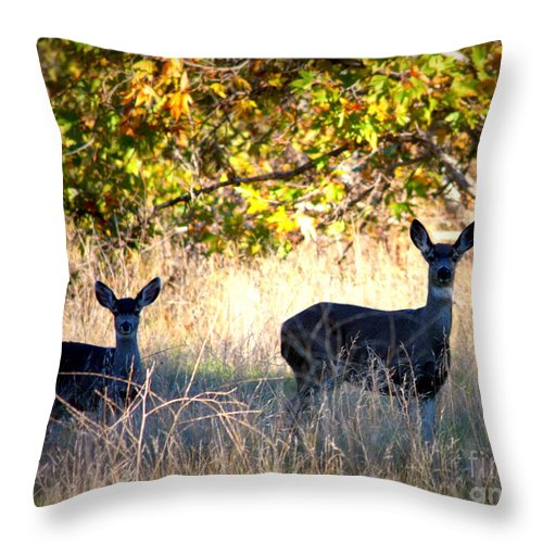 Animal Throw Pillow featuring the photograph Two Deer In Autumn Meadow by Carol Groenen