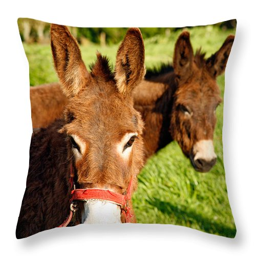 Animals Throw Pillow featuring the photograph Two Donkeys by Gaspar Avila
