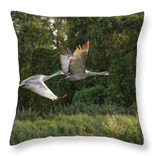 Sandhill Crane Throw Pillow featuring the photograph Two Florida Sandhill Cranes In Flight by Carol Groenen