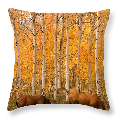 Horse Throw Pillow featuring the photograph Two Horses Grazing In The Autumn Air by James BO Insogna