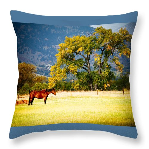 Animal Throw Pillow featuring the photograph Two Horses by Marilyn Hunt