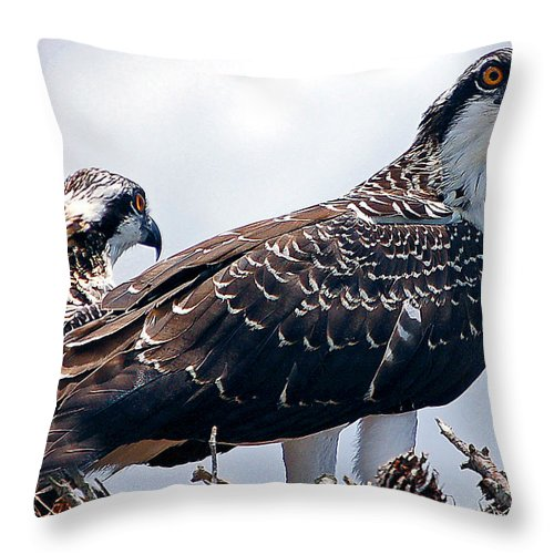 Hawks Throw Pillow featuring the photograph Two In The Nest by Donna Proctor