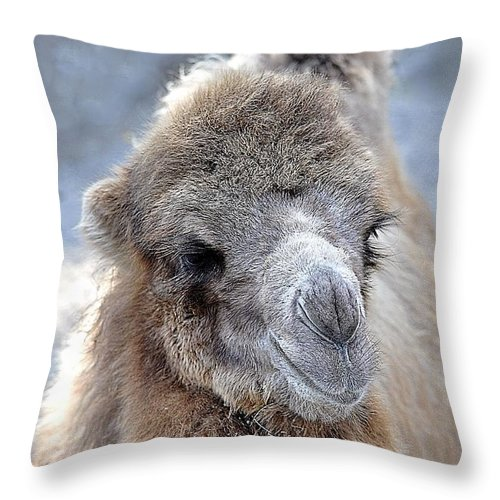 Animals Throw Pillow featuring the photograph Two Lumps Please by Jan Amiss Photography