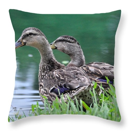 Female Duck. Mallard Throw Pillow featuring the photograph Two Mallards by John Black